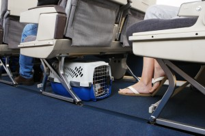 Moving Tips for Our Military Families: Things to Think of When Flying Your Pet