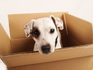 dog in box